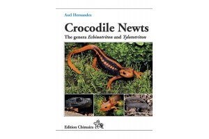 Crocodile Newts - The Primitive Salamandridae of Asia