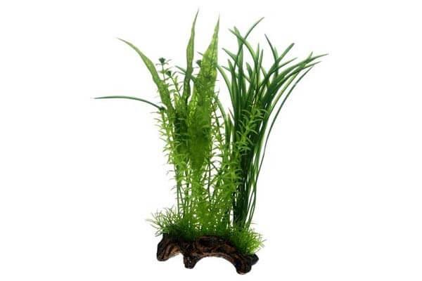 Flora Root