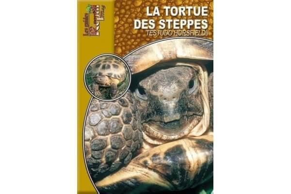 La Tortue des steppes - Testudo horsfieldii Guide Reptilmag