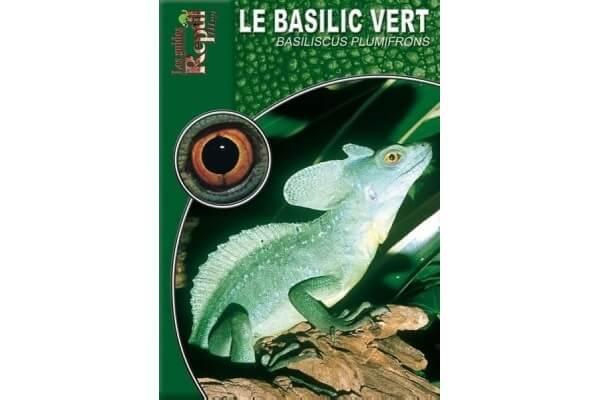 Le Basilic vert - Basiliscus plumifrons Guide Reptilmag