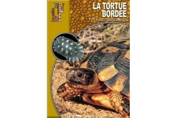 La Tortue Bordée - Testudo marginata Guide Reptilmag