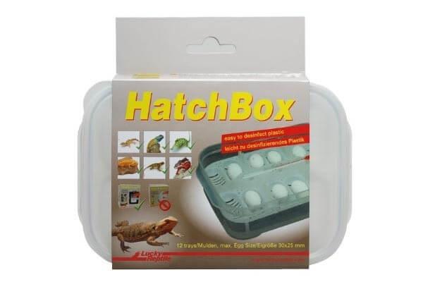 Boîte d'incubation sans substrat