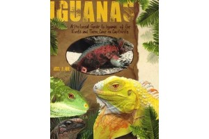 A Pictorial Guide to Iguanas