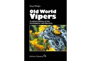 Old World Vipers