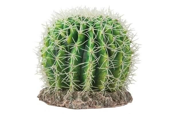 Cactus Sonora