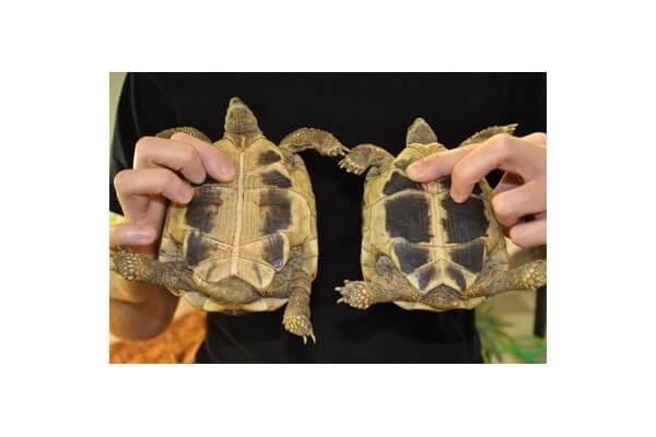 Formation spéciale tortues de terre - samedi 2 et dimanche 3 Octobre 2021