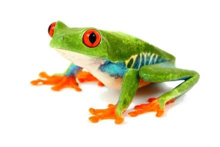 Achat Amphibien - Amphibiens - La Ferme Tropicale