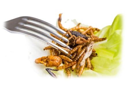 Insectes pour l'alimentation humaine