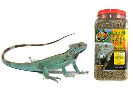 Nourriture pour Iguanes