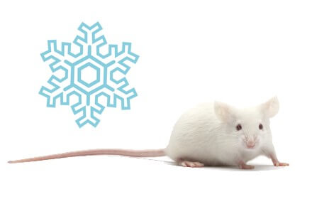 Rongeur Congelé : Souris Congelées, Rats Congelés...- La Ferme Tropicale